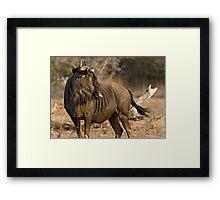 Wildebeest Framed Print