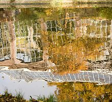 Botanic gardens reflection by Katherine Maguire