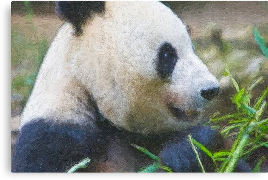 Stylized photo of Bai Yun, a giant panda. Hers was the first successful birth of a giant panda at the Wolong Giant Panda Research Center in China.  by NaturaLight