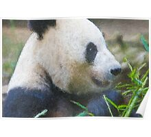 Stylized photo of Bai Yun, a giant panda. Hers was the first successful birth of a giant panda at the Wolong Giant Panda Research Center in China.  Poster