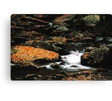 MOUNTAIN STREAM,AUTUMN,GREAT SMOKY MOUNTAINS NP Canvas Print