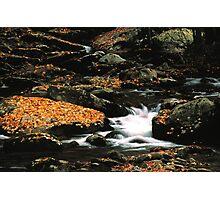 MOUNTAIN STREAM,AUTUMN,GREAT SMOKY MOUNTAINS NP Photographic Print