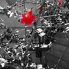 Flower by pheonix