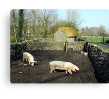 Two pigs in rural Ireland Canvas Print