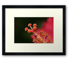 Tip Of The Hibiscus Framed Print