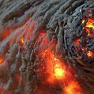 Flaming Seashell 1 by Richard Davis