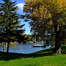 Park on the Northwest Arm by murrstevens