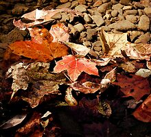 Moments of Fall by Sandy Woolard