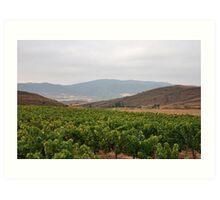 Vineyard near Cirauqui - Camino de Santiago Art Print