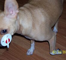 Ginger and her pacifier by Dottie Palmer
