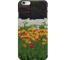 Tulip Beds iPhone Case/Skin