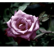This Rose is for you... Photographic Print