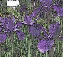 """Purple contours by David """"Oz""""  Osterczy"""