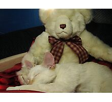 Snuggle Bear Photographic Print