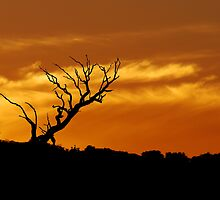 Sunset Silhouette by Julie Thomas