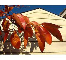 Oz autumn Photographic Print