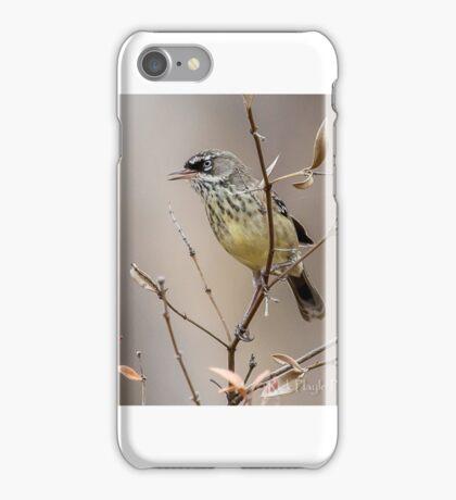 White Browed Scrub Wren iPhone Case/Skin