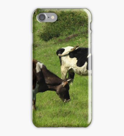 Cows on a Farm iPhone Case/Skin
