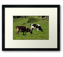 Cows on a Farm Framed Print
