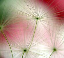 floating seeds by Annemie Hiele