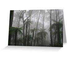 Tree Ferns, Mt Wilson, Australia Greeting Card