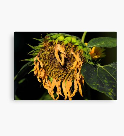 Aged But Beautiful Canvas Print