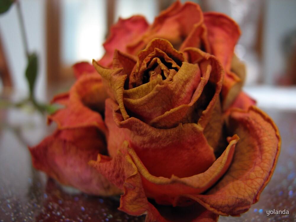 Paper Rose by yolanda