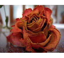 Paper Rose Photographic Print