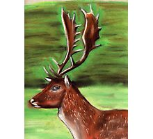 The Irish Deer Photographic Print