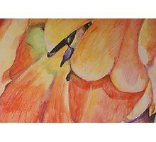 Colorful tulip Photographic Print