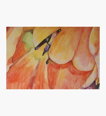 Colorful tulip Photographic Print
