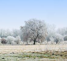 Frosty Mist by irgendeine