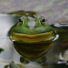 "You lookin' at me bub? by David ""Oz""  Osterczy"