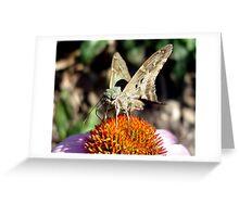 Flutter. Greeting Card