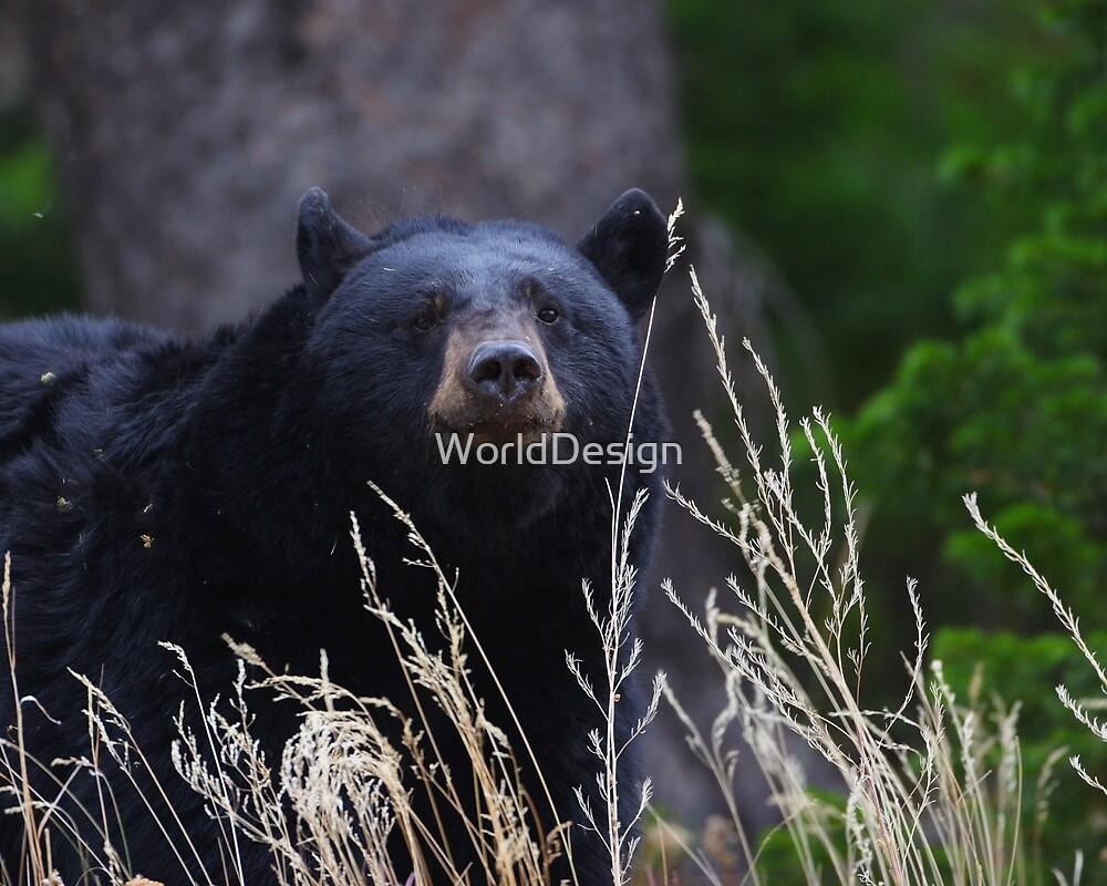 Black Bear Smile by William C. Gladish