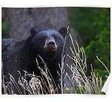 Black Bear Smile Poster