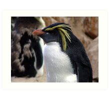 Rockhopper Penguin Art Print