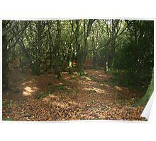 Bearna woods Poster