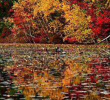 Duck Pond by Christopher  Malatesta
