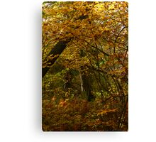 An Autumn Tale Canvas Print