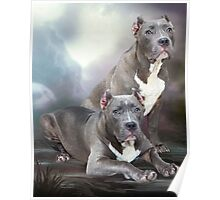 American Bully Poster