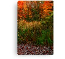 Fall Marsh Canvas Print