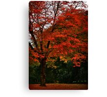 Falling Red Canvas Print