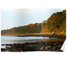 Shoreline Foliage Poster