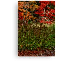 Fall Marsh II Canvas Print