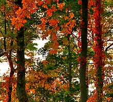 Paints With Leaves by Christopher  Malatesta