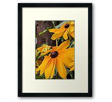 Black-eyed Susans I Framed Print