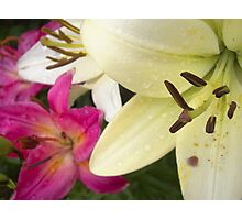 White Lily in the garden 6 Photographic Print