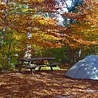 Camping Among The Leaves by Molly  Kinsey