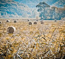 Hay Bales in Snowdonia #2 by Pete Edmunds